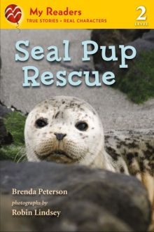 Seal Pup Rescue -  <br/> -  <br/>